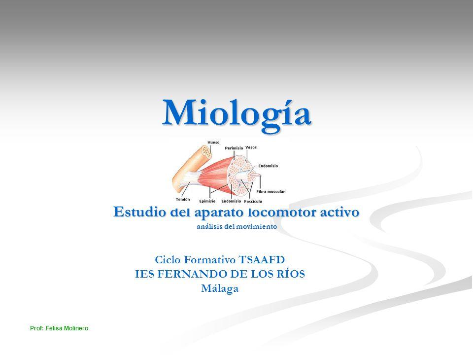 Prof: Felisa Molinero Miología Estudio del aparato locomotor activo análisis del movimiento Ciclo Formativo TSAAFD IES FERNANDO DE LOS RÍOS Málaga