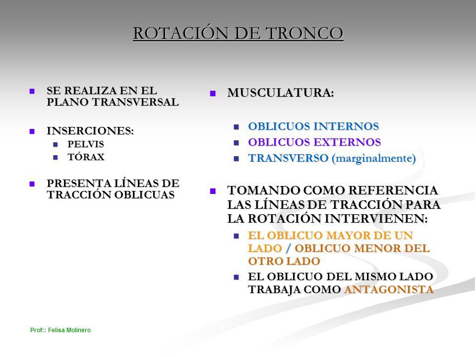 Prof:: Felisa Molinero ROTACIÓN DE TRONCO SE REALIZA EN EL PLANO TRANSVERSAL SE REALIZA EN EL PLANO TRANSVERSAL INSERCIONES: INSERCIONES: PELVIS PELVI
