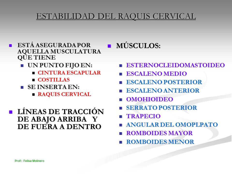 Prof:: Felisa Molinero ESTABILIDAD DEL RAQUIS CERVICAL ESTÁ ASEGURADA POR AQUELLA MUSCULATURA QUE TIENE ESTÁ ASEGURADA POR AQUELLA MUSCULATURA QUE TIE