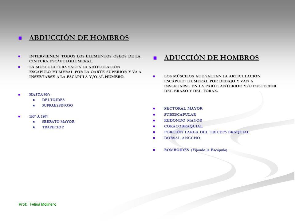 Prof:: Felisa Molinero ABDUCCIÓN DE HOMBROS ABDUCCIÓN DE HOMBROS INTERVIENEN TODOS LOS ELEMENTOS ÓSEOS DE LA CINTURA ESCÁPULOHUMERAL. INTERVIENEN TODO
