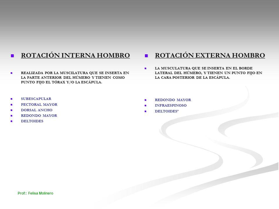 Prof:: Felisa Molinero ROTACIÓN INTERNA HOMBRO ROTACIÓN INTERNA HOMBRO REALIZADA POR LA MUSCILATURA QUE SE INSERTA EN LA PARTE ANTERIOR DEL HÚMERO Y T