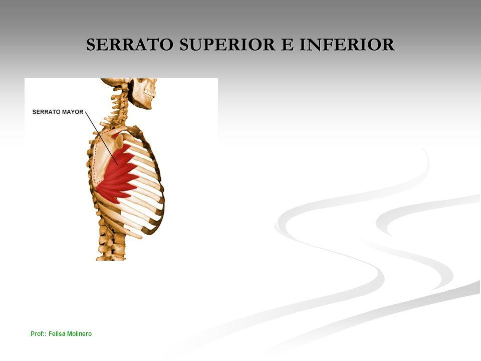 Prof:: Felisa Molinero SERRATO SUPERIOR E INFERIOR
