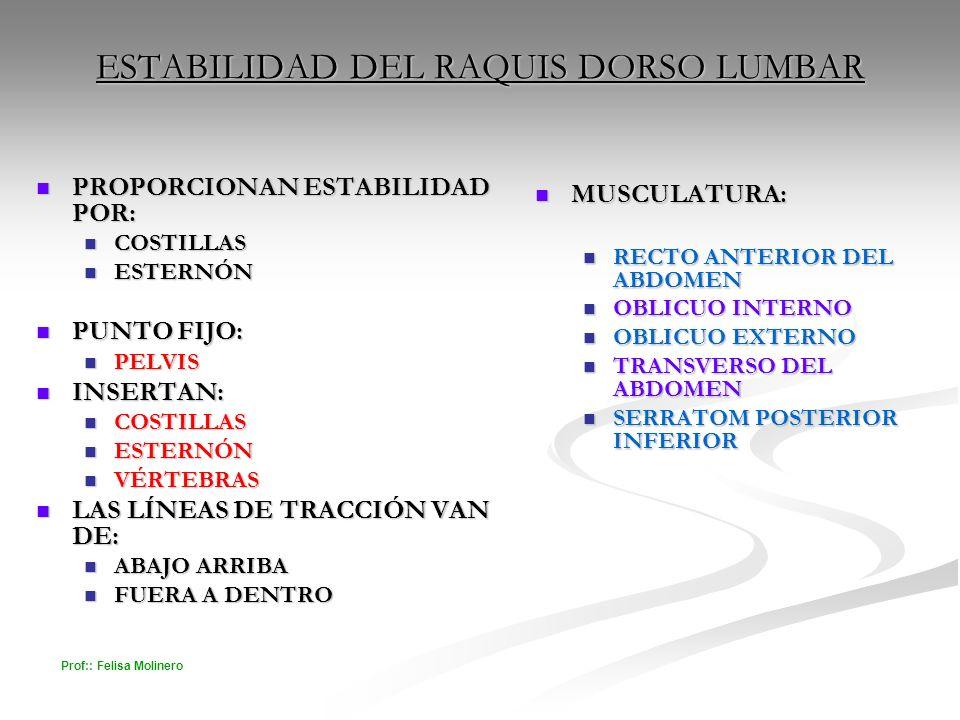 Prof:: Felisa Molinero ESTABILIDAD DEL RAQUIS DORSO LUMBAR PROPORCIONAN ESTABILIDAD POR: PROPORCIONAN ESTABILIDAD POR: COSTILLAS COSTILLAS ESTERNÓN ES