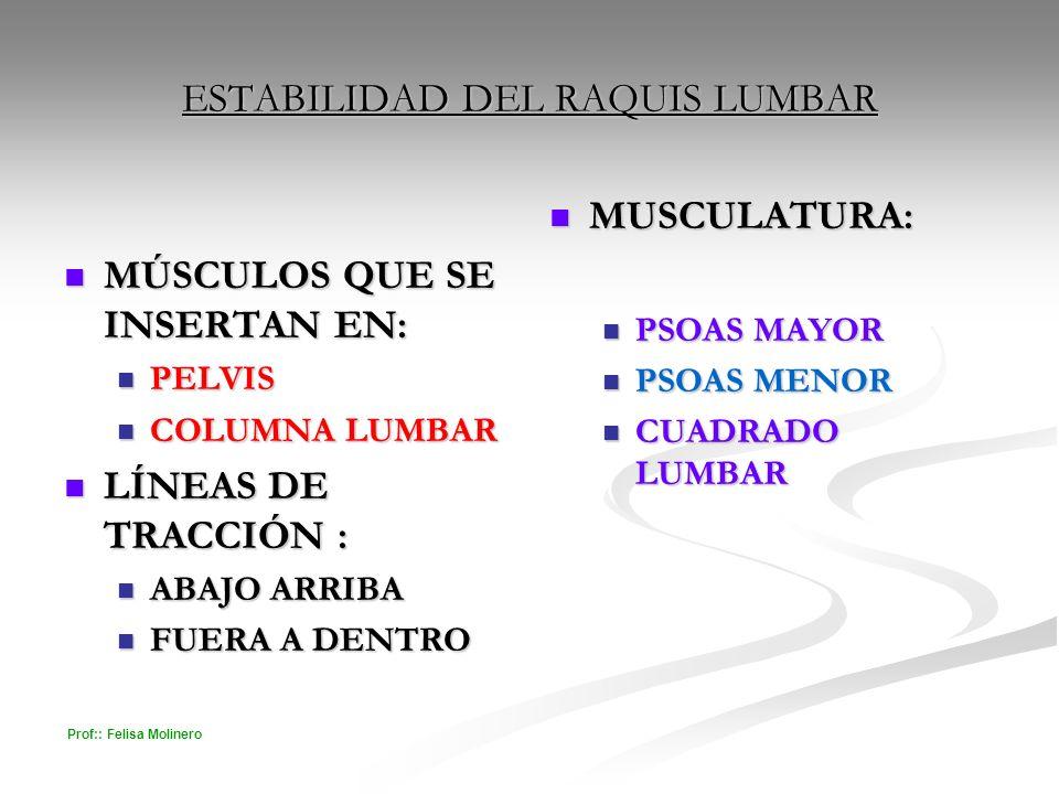 Prof:: Felisa Molinero ESTABILIDAD DEL RAQUIS LUMBAR MÚSCULOS QUE SE INSERTAN EN: MÚSCULOS QUE SE INSERTAN EN: PELVIS PELVIS COLUMNA LUMBAR COLUMNA LU