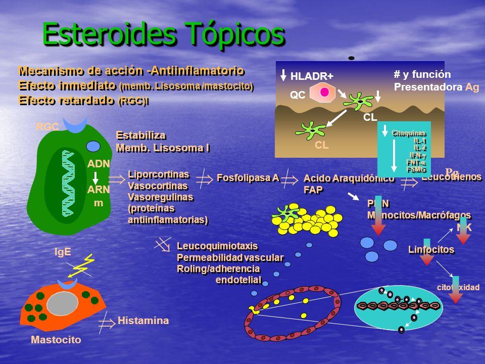 Esteroides Tópicos Leucotrienos PMN Monocitos/Macrófagos PMN Monocitos/Macrófagos NK citotoxidad Mecanismo de acción -Antiinflamatorio Efecto inmediat