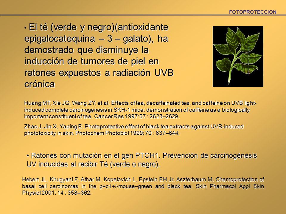 FOTOPROTECCION El té (verde y negro)(antioxidante epigalocatequina – 3 – galato), ha demostrado que disminuye la inducción de tumores de piel en raton