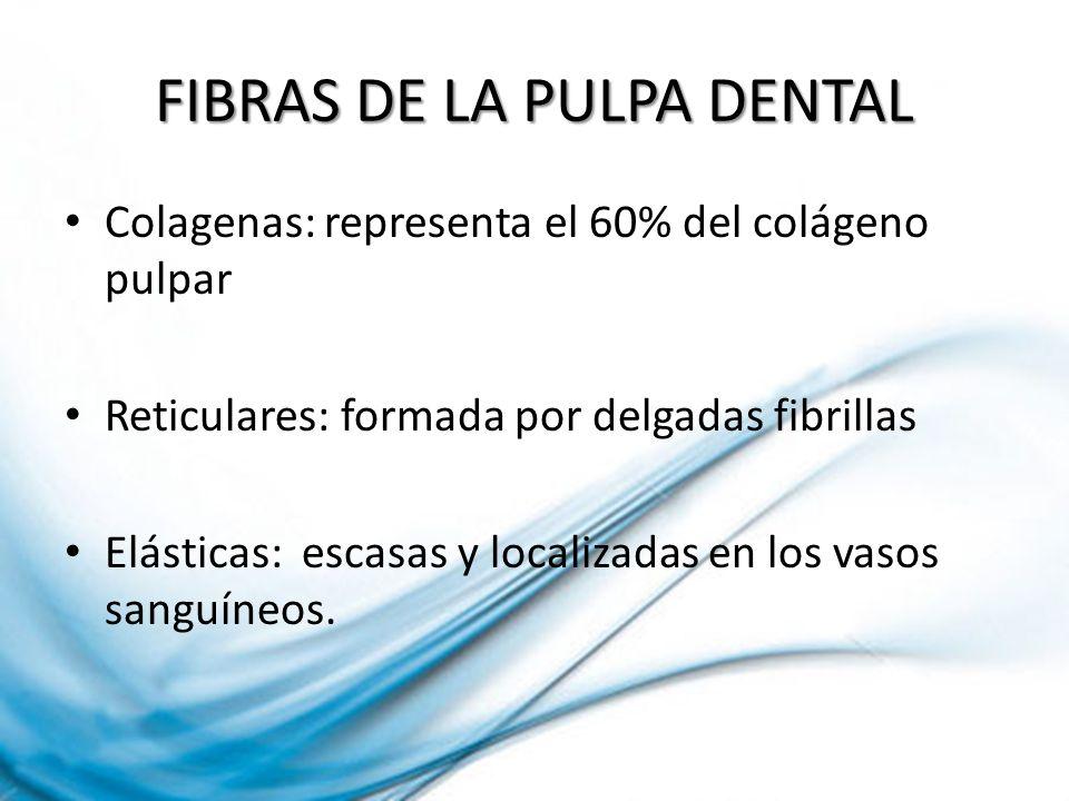FIBRAS DE LA PULPA DENTAL Colagenas: representa el 60% del colágeno pulpar Reticulares: formada por delgadas fibrillas Elásticas: escasas y localizada