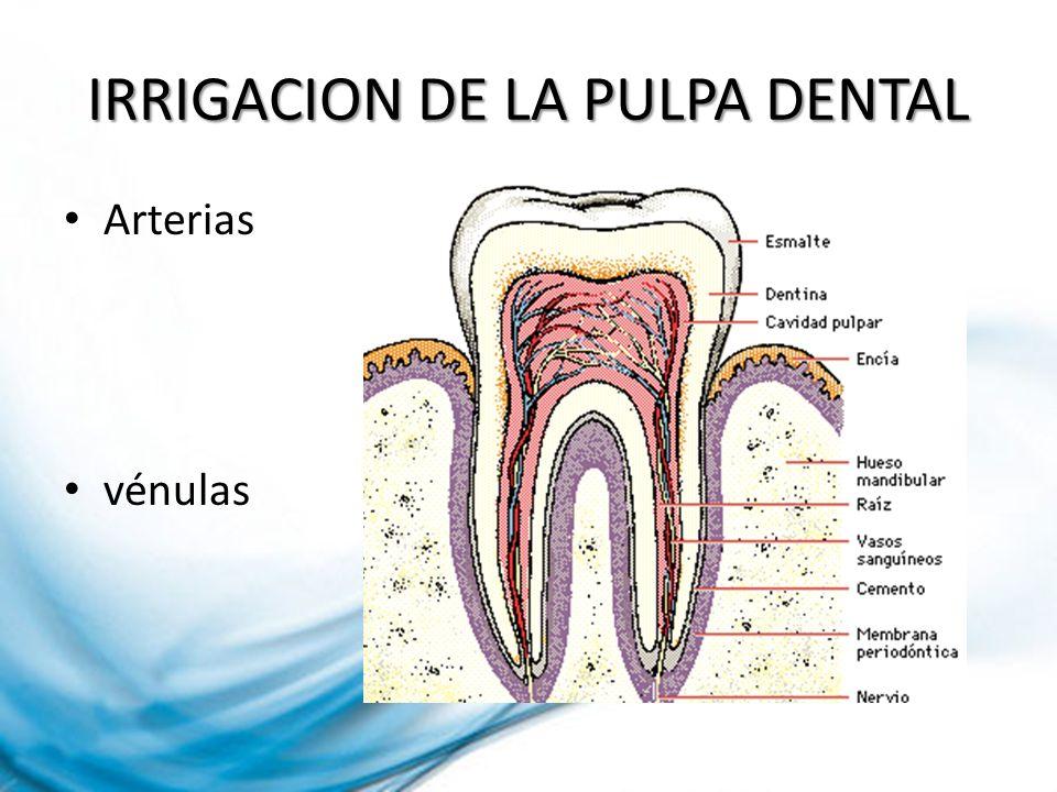 IRRIGACION DE LA PULPA DENTAL Arterias vénulas
