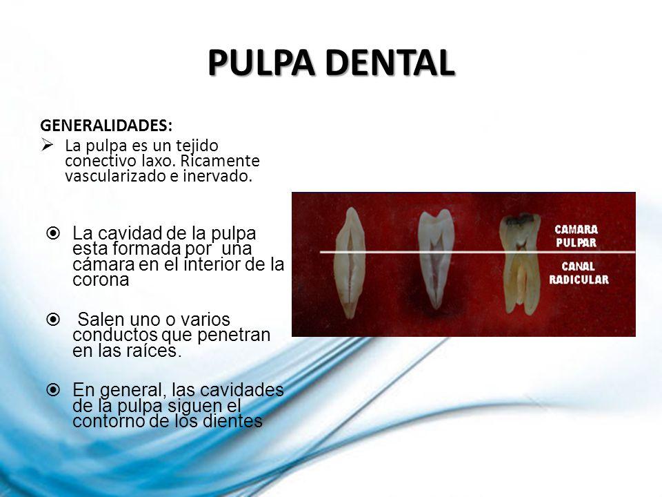 PULPA DENTAL GENERALIDADES: La pulpa es un tejido conectivo laxo. Ricamente vascularizado e inervado. La cavidad de la pulpa esta formada por una cáma