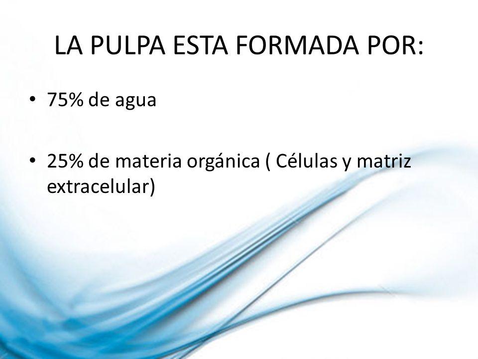 LA PULPA ESTA FORMADA POR: 75% de agua 25% de materia orgánica ( Células y matriz extracelular)