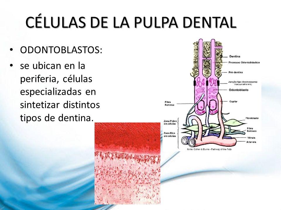 Es una inflamación productiva de la pulpa debida a una exposición cariosa extensa en dientes jóvenes caracterizada por tejido de granulación recubierto a veces de epitelio resultante de irritación
