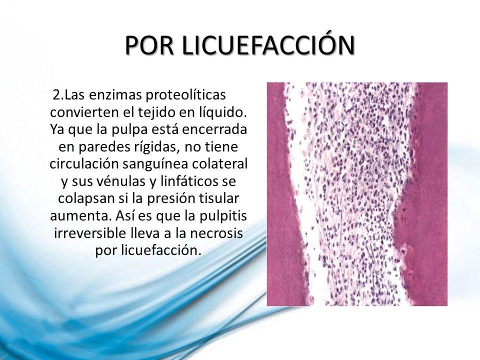 POR LICUEFACCIÓN 2.Las enzimas proteolíticas convierten el tejido en líquido. Ya que la pulpa está encerrada en paredes rígidas, no tiene circulación