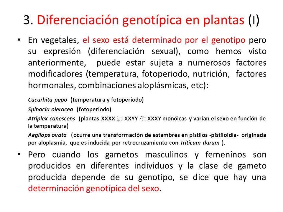 3. Diferenciación genotípica en plantas ( I ) En vegetales, el sexo está determinado por el genotipo pero su expresión (diferenciación sexual), como h