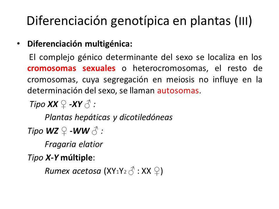 Diferenciación genotípica en plantas ( III ) Diferenciación multigénica: El complejo génico determinante del sexo se localiza en los cromosomas sexual