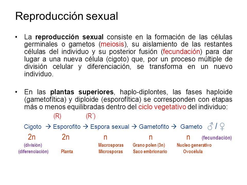 Reproducción sexual La reproducción sexual consiste en la formación de las células germinales o gametos (meiosis), su aislamiento de las restantes cél