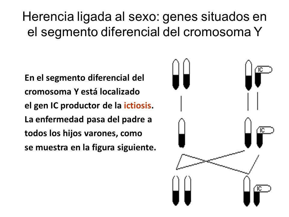 Herencia ligada al sexo: genes situados en el segmento diferencial del cromosoma Y En el segmento diferencial del cromosoma Y está localizado el gen I
