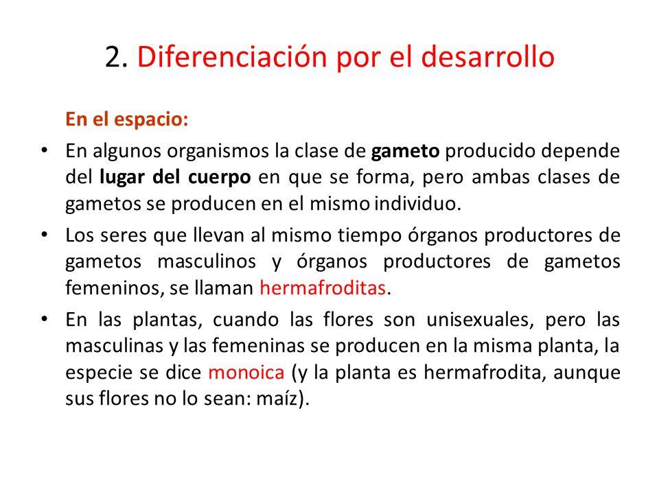 Diferenciación por el desarrollo En el espacio: formación simultánea de gametos masculinos y femeninos por diferenciación histológica: caso de organismos hermafroditas o plantas monóicas.