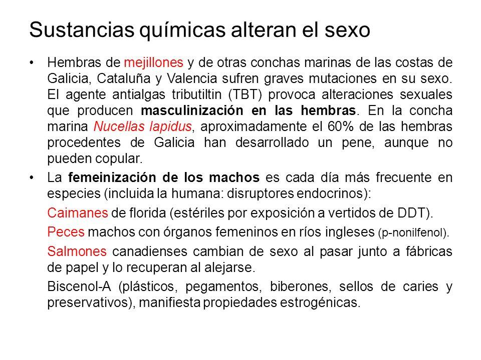 Sustancias químicas alteran el sexo Hembras de mejillones y de otras conchas marinas de las costas de Galicia, Cataluña y Valencia sufren graves mutac