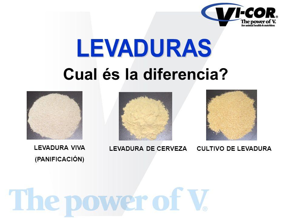 LEVADURA VIVA (PANIFICACIÓN) LEVADURA DE CERVEZACULTIVO DE LEVADURA Cual és la diferencia?