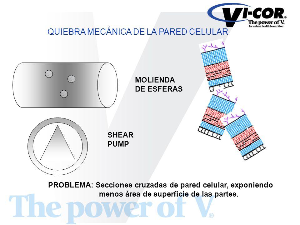 QUIEBRA MECÁNICA DE LA PARED CELULAR MOLIENDA DE ESFERAS SHEAR PUMP PROBLEMA: Secciones cruzadas de pared celular, exponiendo menos área de superficie