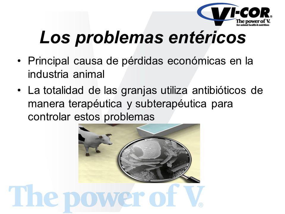Los problemas entéricos Principal causa de pérdidas económicas en la industria animal La totalidad de las granjas utiliza antibióticos de manera terap