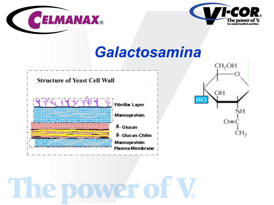 Galactosamina