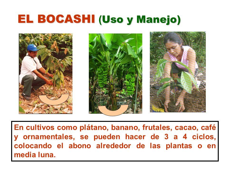 EL BOCASHI ( Uso y Manejo) En cultivos como plátano, banano, frutales, cacao, café y ornamentales, se pueden hacer de 3 a 4 ciclos, colocando el abono
