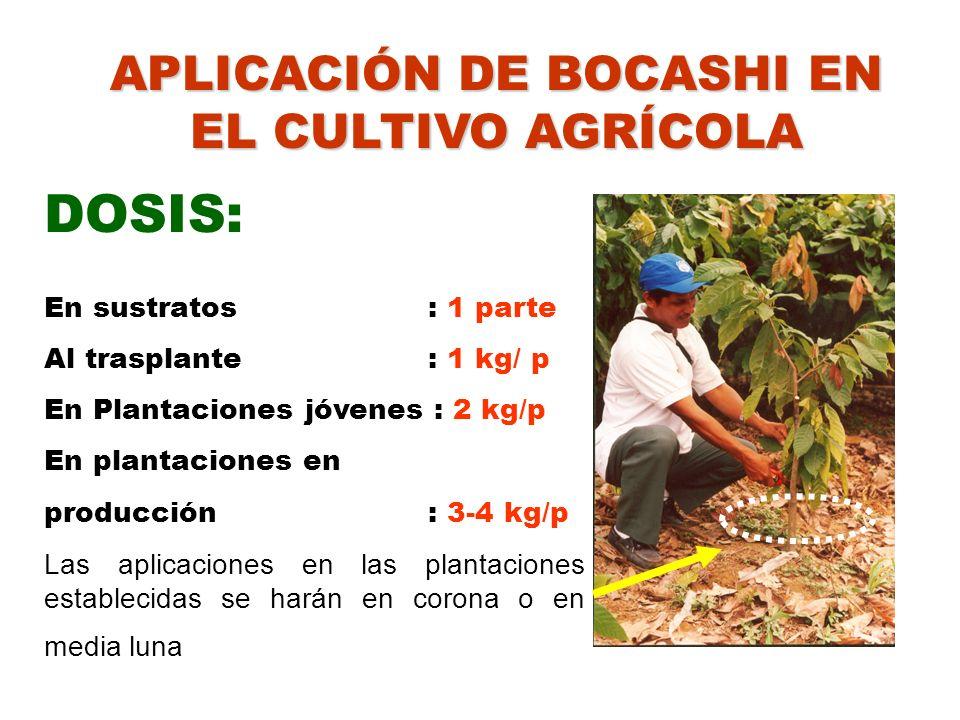 APLICACIÓN DE BOCASHI EN EL CULTIVO AGRÍCOLA DOSIS: En sustratos: 1 parte Al trasplante : 1 kg/ p En Plantaciones jóvenes : 2 kg/p En plantaciones en