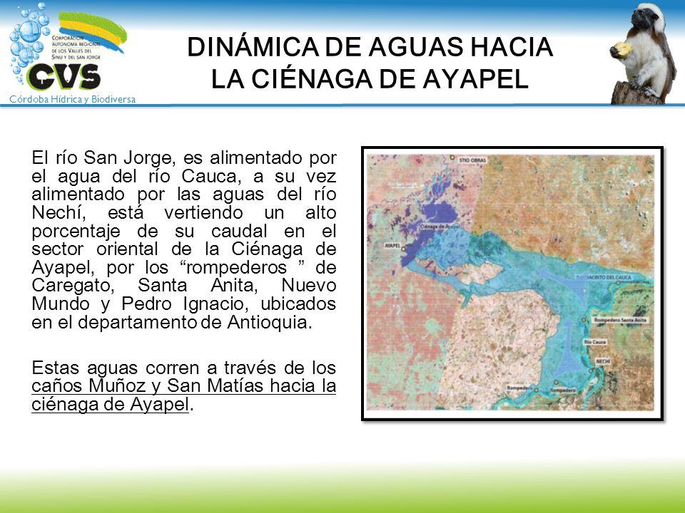 Córdoba Hídrica y Biodiversa El río San Jorge, es alimentado por el agua del río Cauca, a su vez alimentado por las aguas del río Nechí, está vertiend