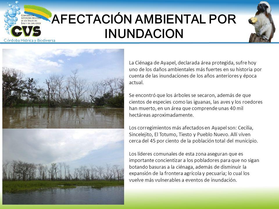 Córdoba Hídrica y Biodiversa La Ciénaga de Ayapel, declarada área protegida, sufre hoy uno de los daños ambientales más fuertes en su historia por cue