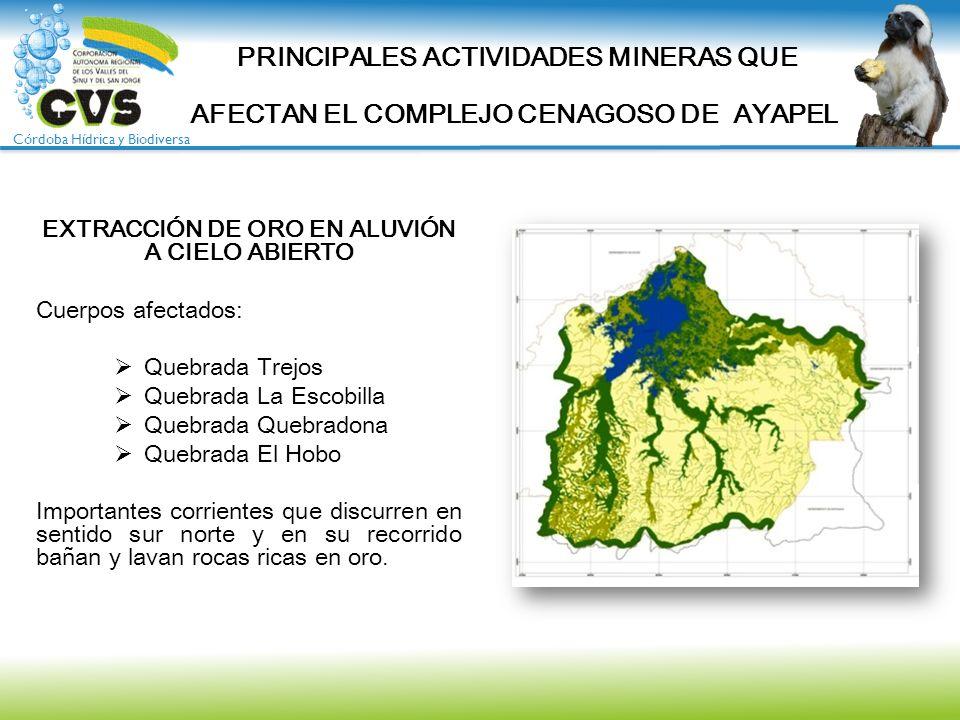 Córdoba Hídrica y Biodiversa EXTRACCIÓN DE ORO EN ALUVIÓN A CIELO ABIERTO Cuerpos afectados: Quebrada Trejos Quebrada La Escobilla Quebrada Quebradona