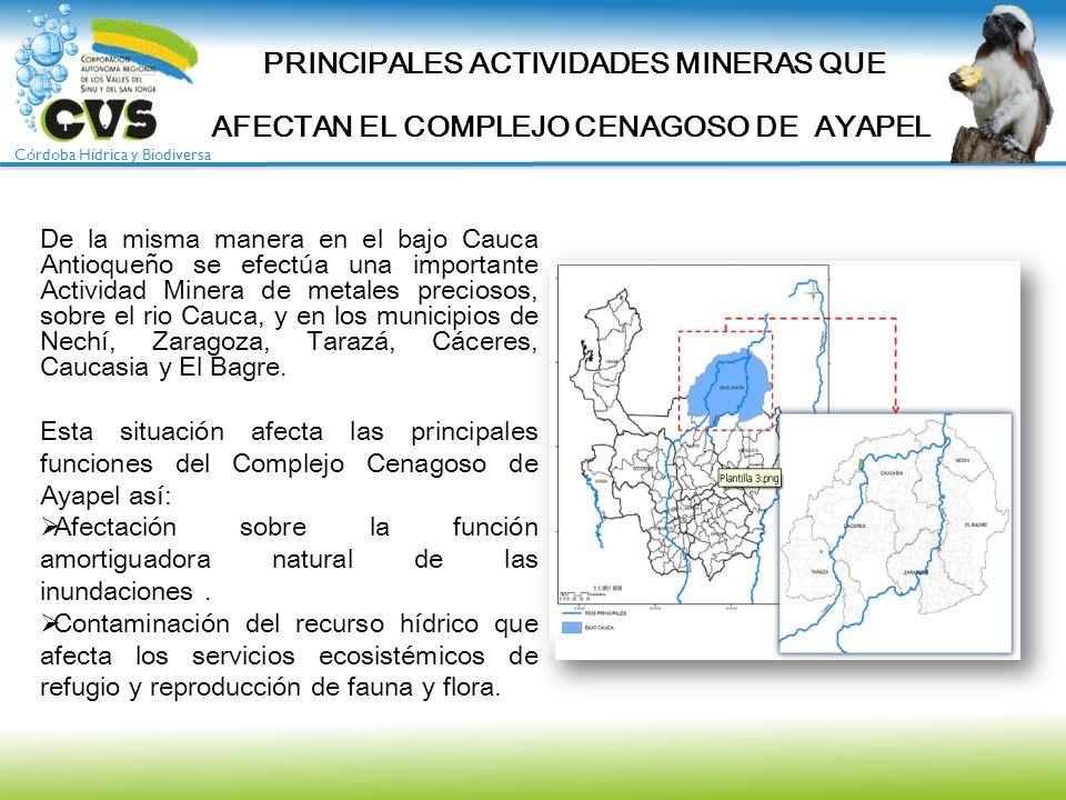 Córdoba Hídrica y Biodiversa De la misma manera en el bajo Cauca Antioqueño se efectúa una importante Actividad Minera de metales preciosos, sobre el