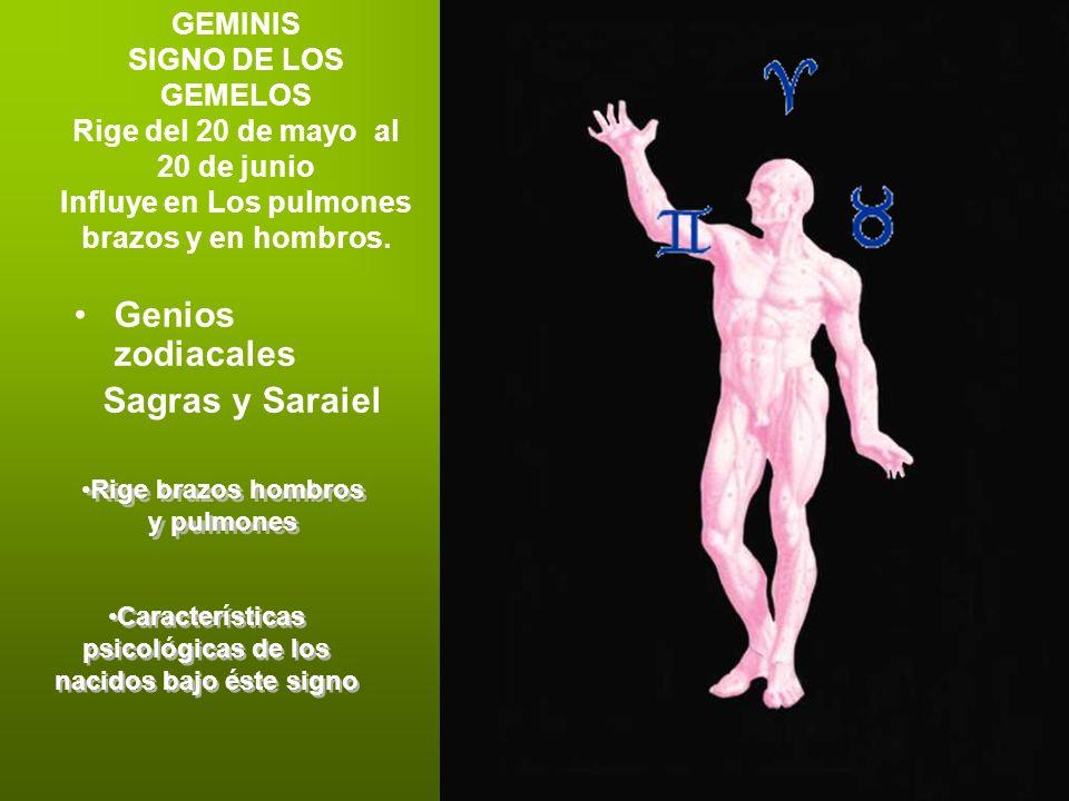 GEMINIS SIGNO DE LOS GEMELOS Rige del 20 de mayo al 20 de junio Influye en Los pulmones brazos y en hombros. Genios zodiacales Sagras y Saraiel Rige b