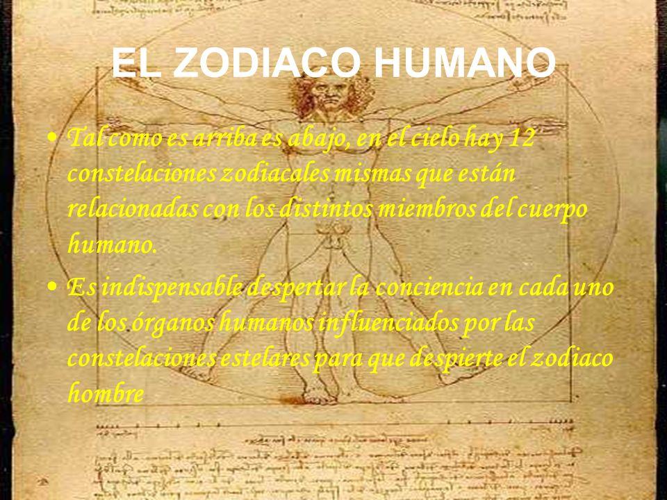 EL ZODIACO HUMANO Tal como es arriba es abajo, en el cielo hay 12 constelaciones zodiacales mismas que están relacionadas con los distintos miembros d