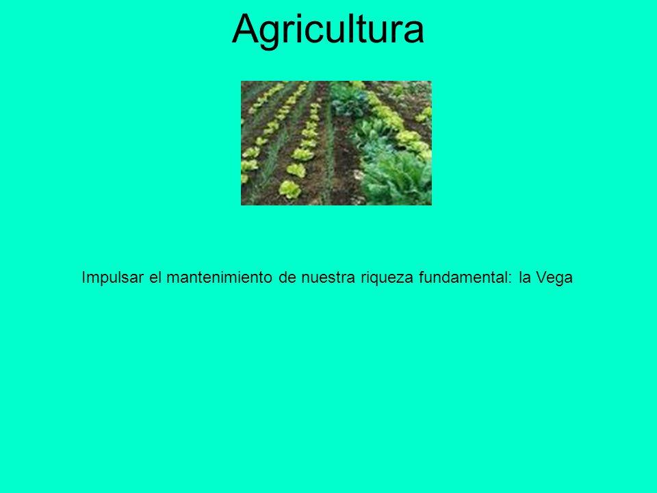 Agricultura Impulsar el mantenimiento de nuestra riqueza fundamental: la Vega