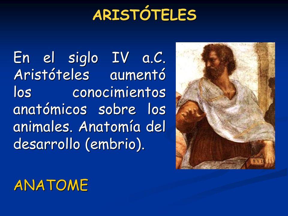 ARISTÓTELES En el siglo IV a.C. Aristóteles aumentó los conocimientos anatómicos sobre los animales. Anatomía del desarrollo (embrio). ANATOME