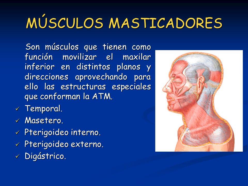 MÚSCULOS MASTICADORES Son músculos que tienen como función movilizar el maxilar inferior en distintos planos y direcciones aprovechando para ello las