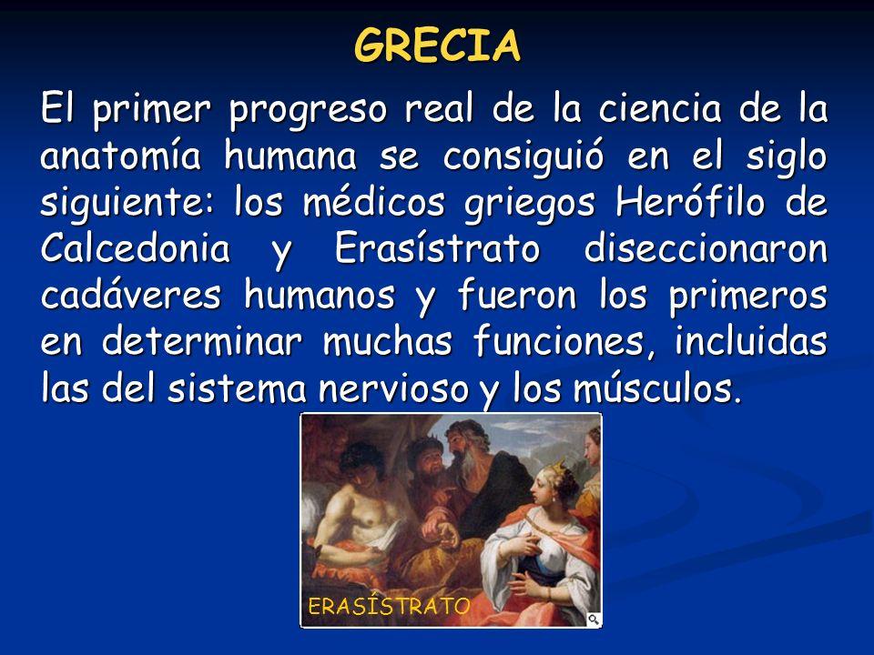 GRECIA El primer progreso real de la ciencia de la anatomía humana se consiguió en el siglo siguiente: los médicos griegos Herófilo de Calcedonia y Er