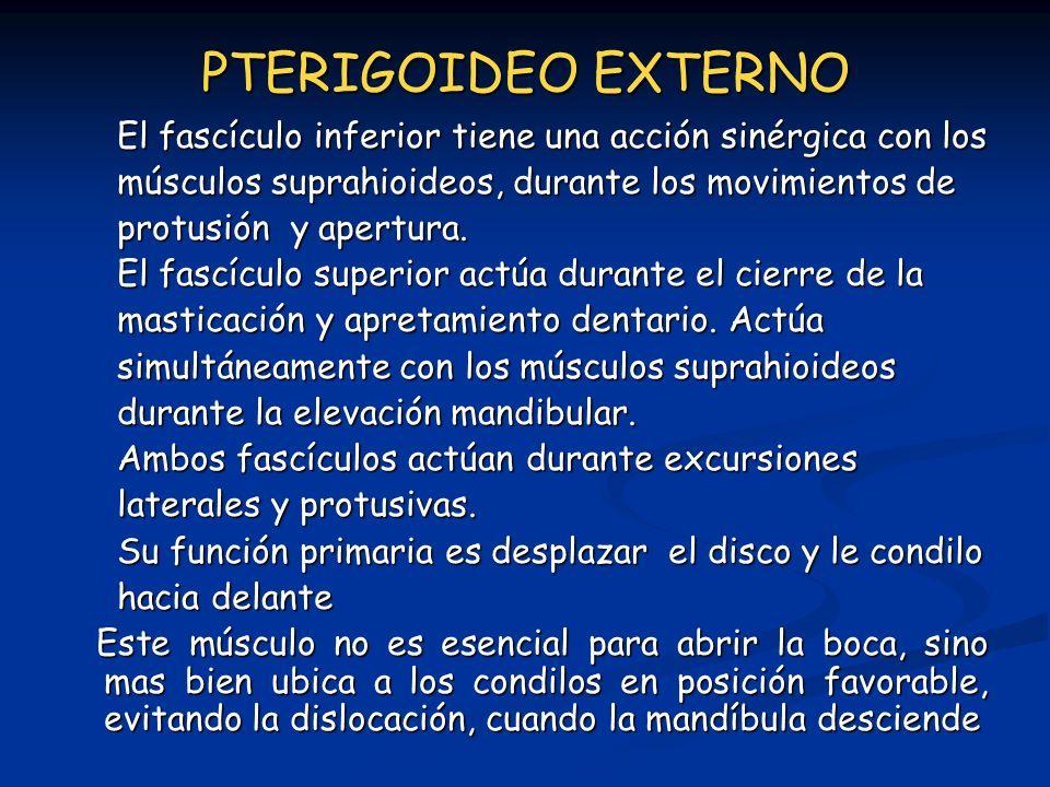 PTERIGOIDEO EXTERNO El fascículo inferior tiene una acción sinérgica con los músculos suprahioideos, durante los movimientos de protusión y apertura.