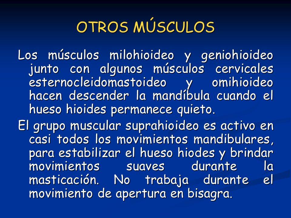 OTROS MÚSCULOS Los músculos milohioideo y geniohioideo junto con algunos músculos cervicales esternocleidomastoideo y omihioideo hacen descender la ma