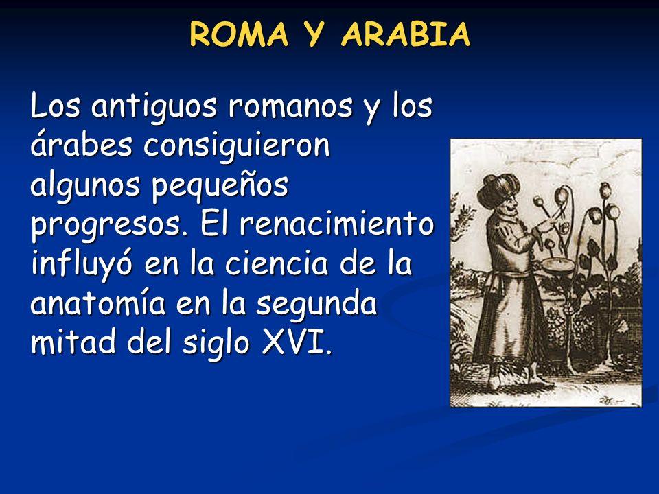 ROMA Y ARABIA Los antiguos romanos y los árabes consiguieron algunos pequeños progresos. El renacimiento influyó en la ciencia de la anatomía en la se
