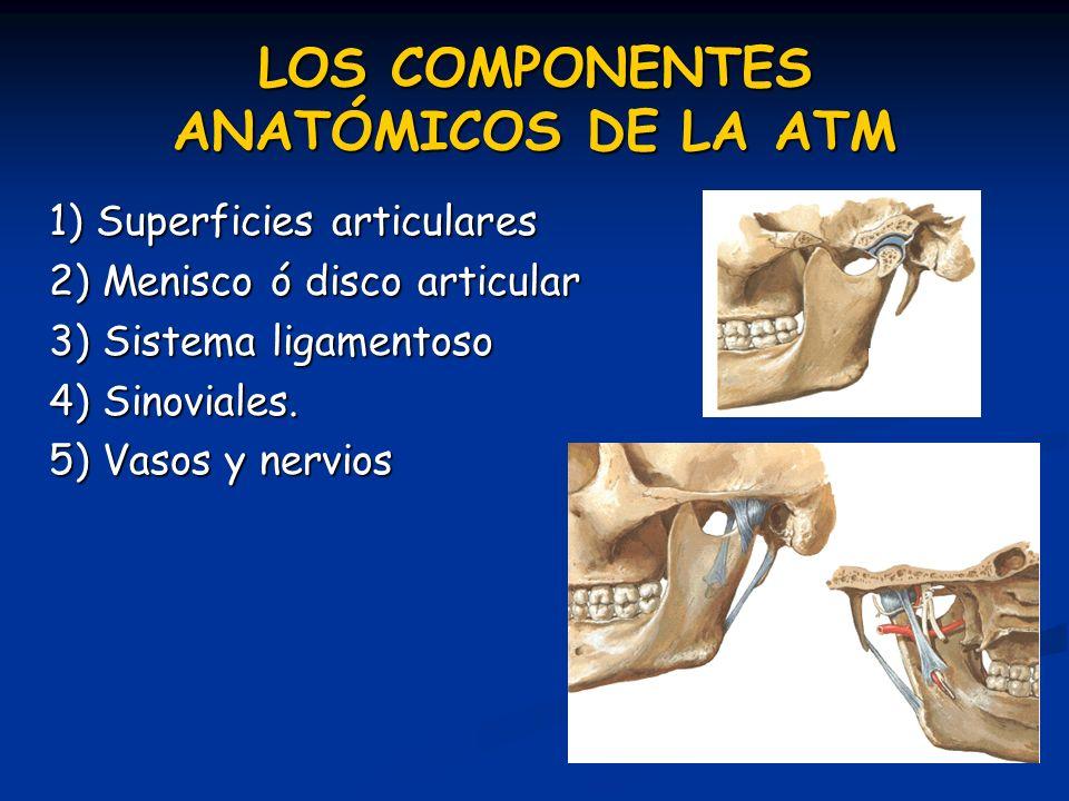 LOS COMPONENTES ANATÓMICOS DE LA ATM 1) Superficies articulares 2) Menisco ó disco articular 3) Sistema ligamentoso 4) Sinoviales. 5) Vasos y nervios