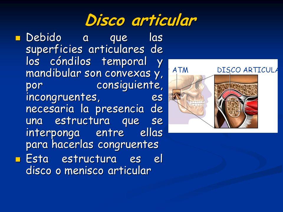 Disco articular Debido a que las superficies articulares de los cóndilos temporal y mandibular son convexas y, por consiguiente, incongruentes, es nec