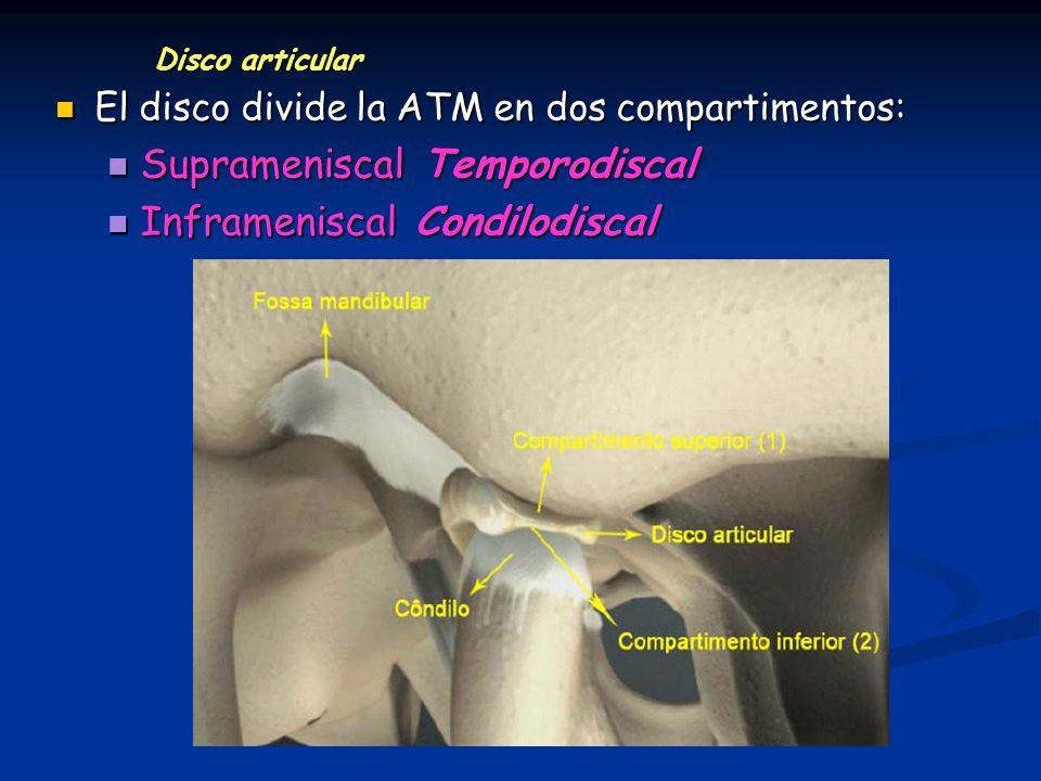 Disco articular El disco divide la ATM en dos compartimentos: El disco divide la ATM en dos compartimentos: Suprameniscal Temporodiscal Suprameniscal