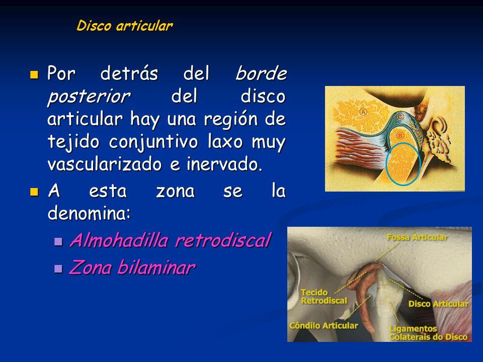 Disco articular Por detrás del borde posterior del disco articular hay una región de tejido conjuntivo laxo muy vascularizado e inervado. Por detrás d