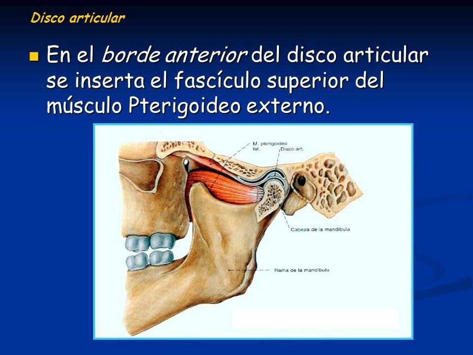 Disco articular En el borde anterior del disco articular se inserta el fascículo superior del músculo Pterigoideo externo. En el borde anterior del di