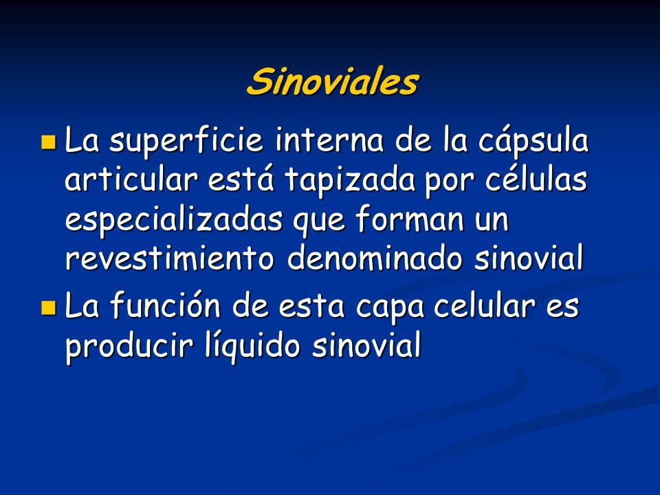 Sinoviales La superficie interna de la cápsula articular está tapizada por células especializadas que forman un revestimiento denominado sinovial La s