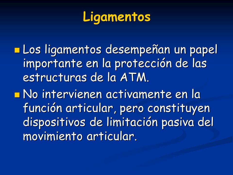 Ligamentos Los ligamentos desempeñan un papel importante en la protección de las estructuras de la ATM. Los ligamentos desempeñan un papel importante