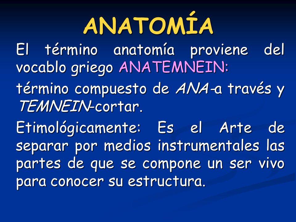 ANATOMÍA El término anatomía proviene del vocablo griego ANATEMNEIN: término compuesto de ANA-a través y TEMNEIN-cortar. Etimológicamente: Es el Arte