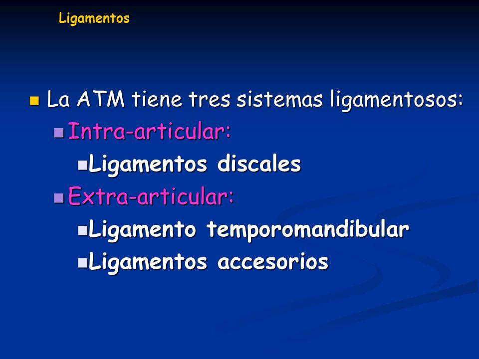 Ligamentos La ATM tiene tres sistemas ligamentosos: La ATM tiene tres sistemas ligamentosos: Intra-articular: Intra-articular: Ligamentos discales Lig